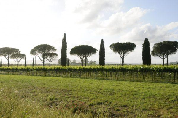 Location de Maison de Vacances - Onoliving - Italie, Toscane - Follonica