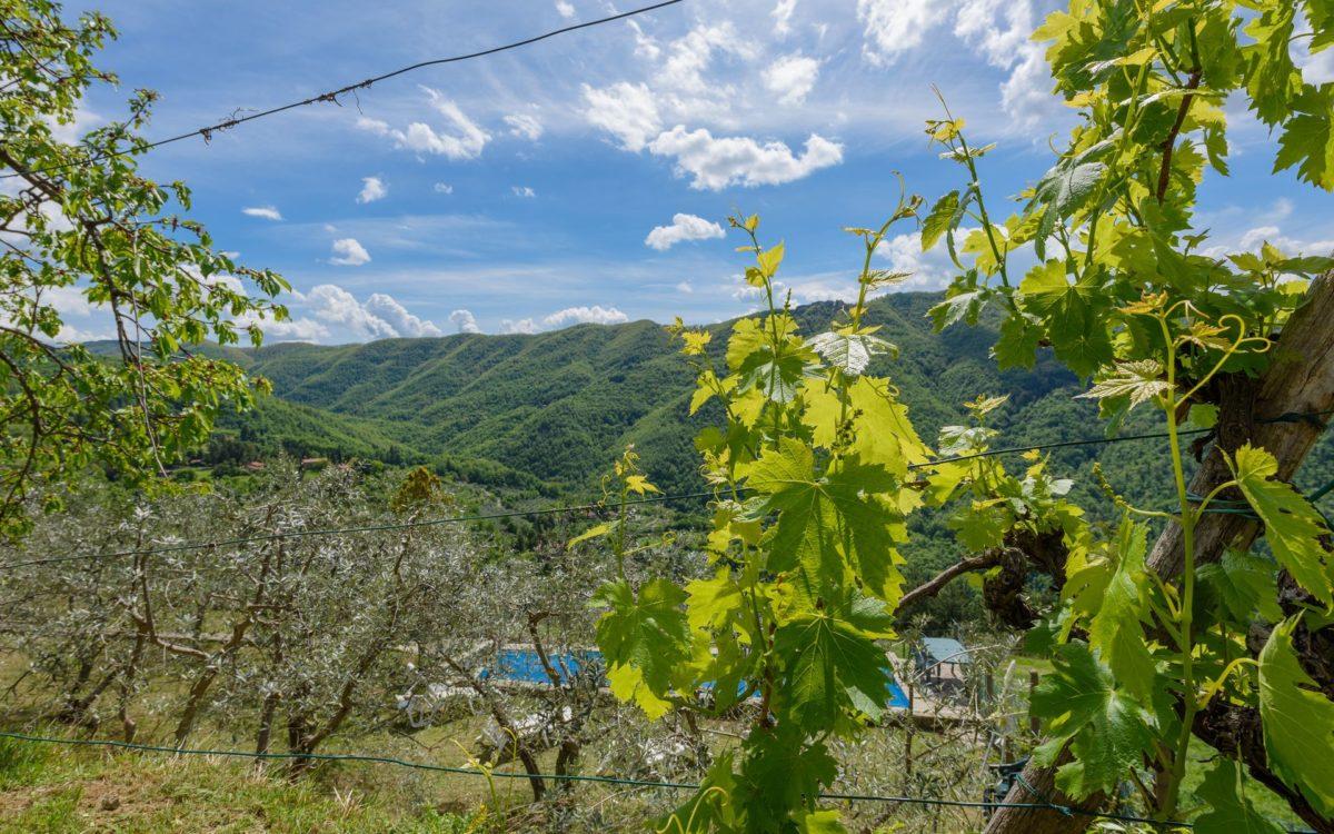 Location de maison, Villa Odala, Onoliving, Italie, Toscane - Florence