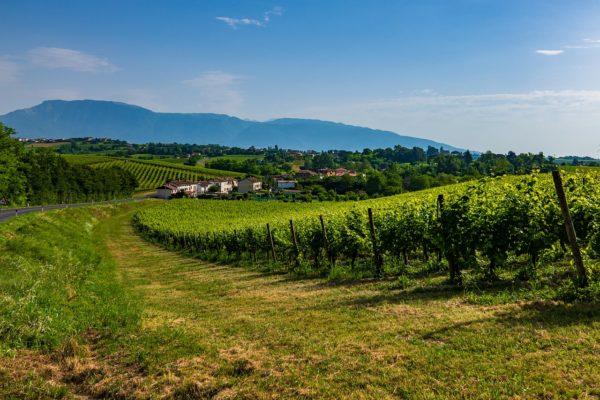 Les collines du Prosecco, Carnet de voyages, Maisons Vacances, Onoliving